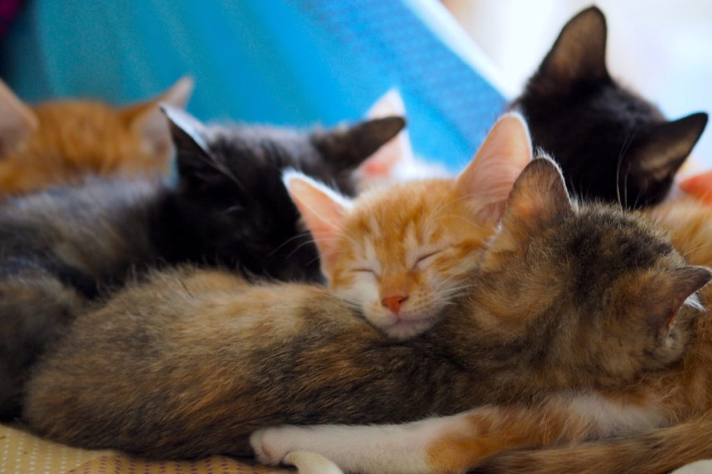 Six kittens sleeping in a pile