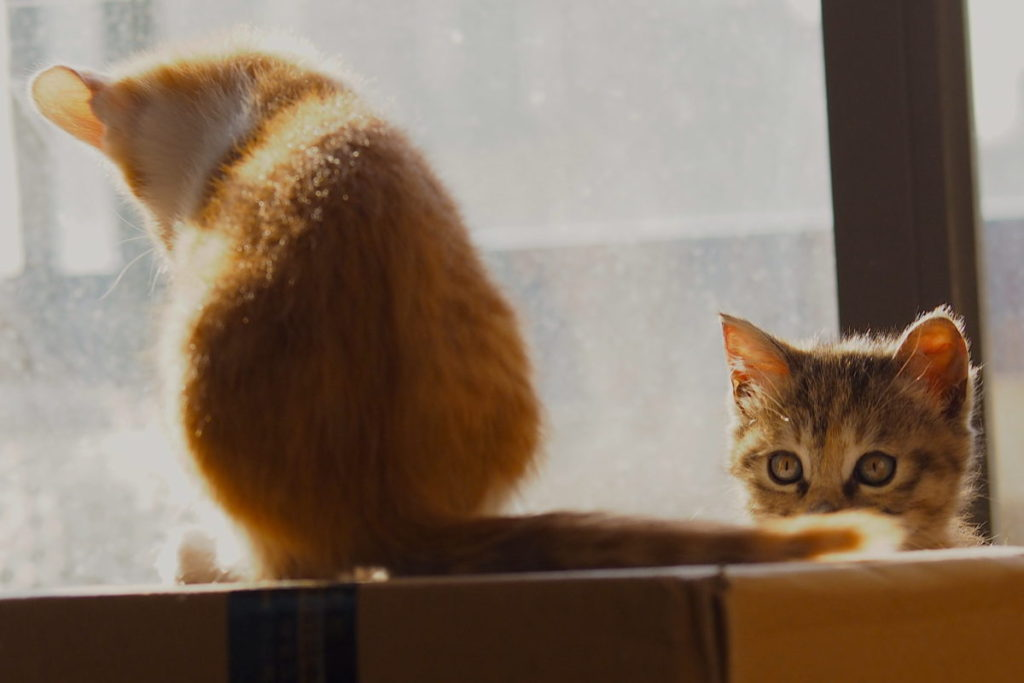 A tabby cat watches an orange cat sitting on top of a box