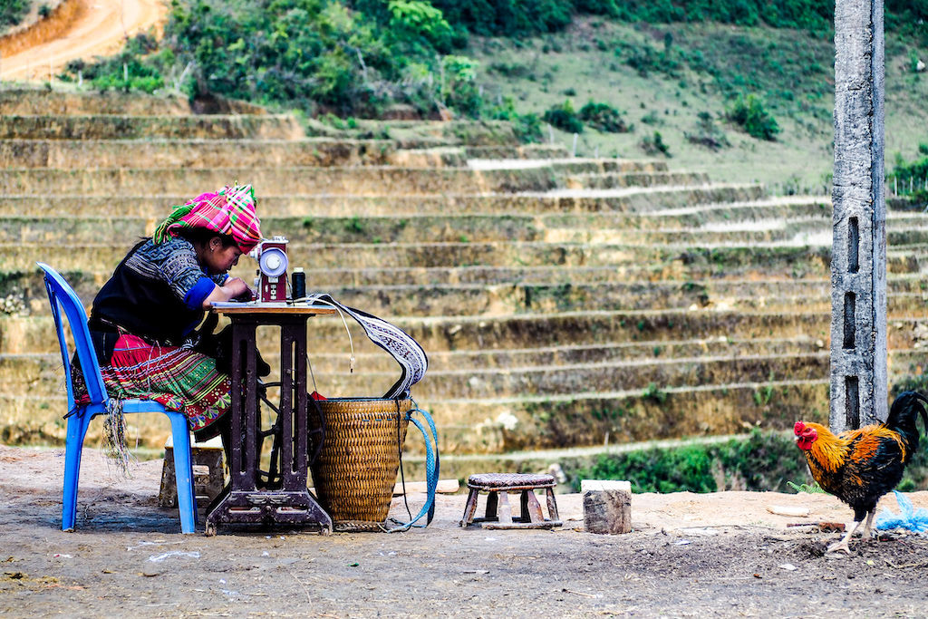 A woman sitting in a plastic chair sewing with a rooster watching and rice paddies in the background